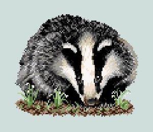 un animal -Ajonc - le 28 septembre trouvé par Suri Blaireau_wordpress