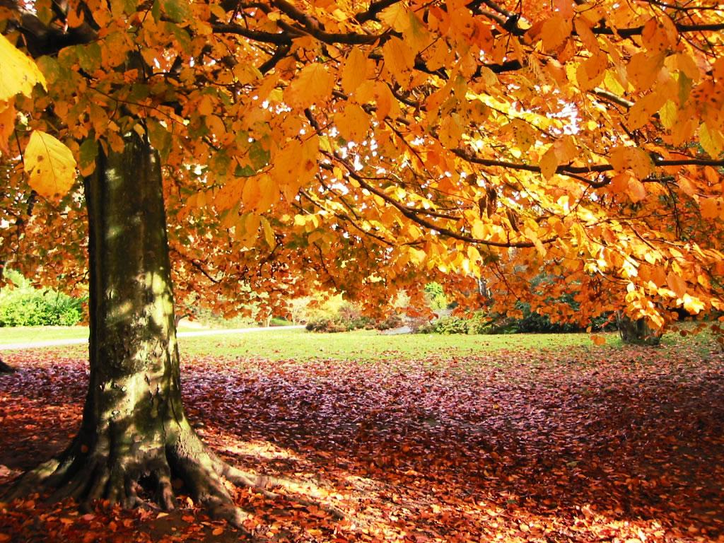 COLORES  del  OTOÑO............. - Página 2 Outono-lindo