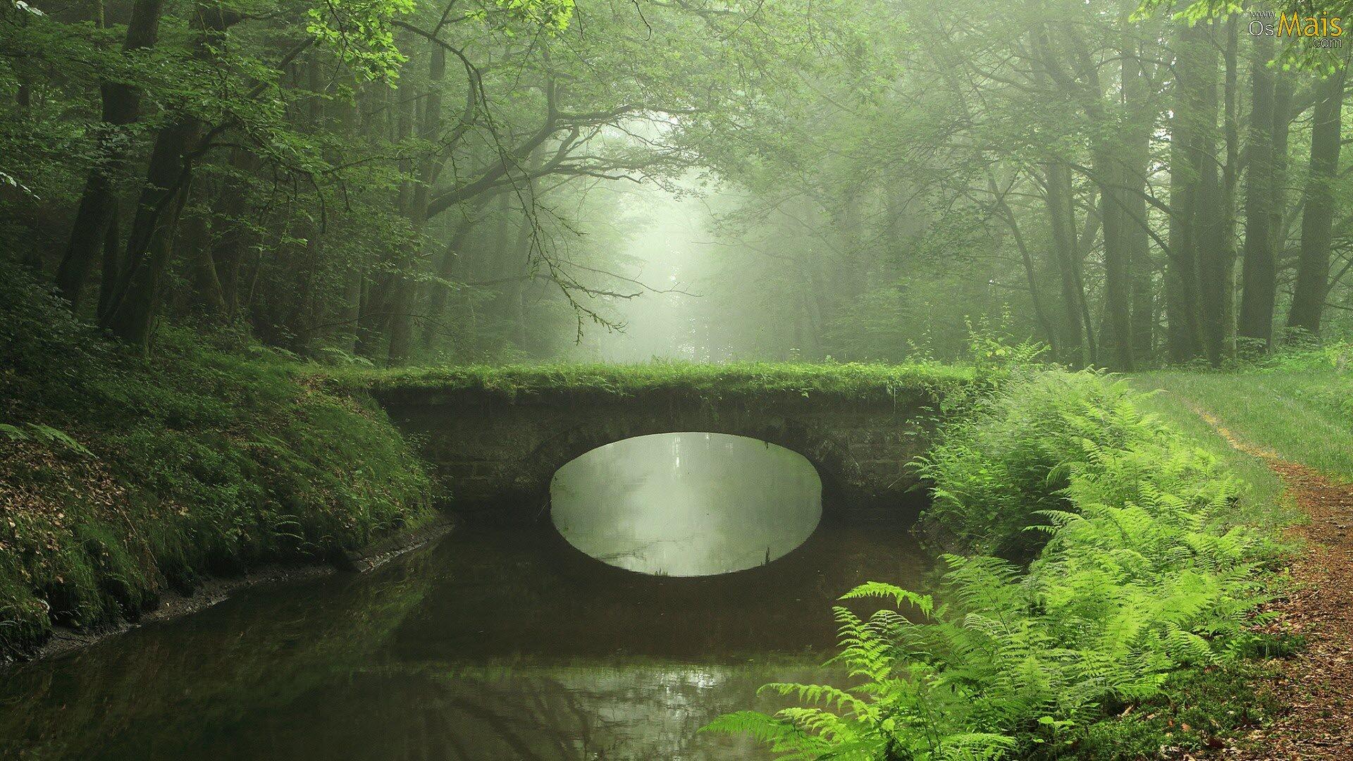 [ Teste Chunnin ] Robb Ponte-floresta-nevoa-wallpaper