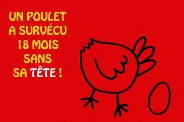 Sve je zapravo san - Page 12 Poulet_une_vvimv8-360x240