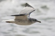 Ballina, ovni et photo… Cornwall-seagull