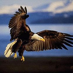 Test su carattere e personalità Aquila
