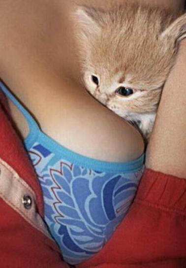 Humeur de l'instant... en ce que vous voulez - Page 5 Phobie-chat