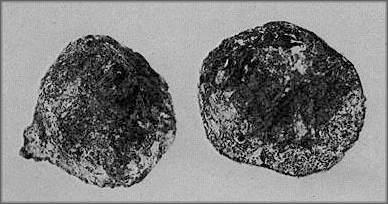 """Des découvertes archéologiques """"Improbables"""" pour l'époque? - Page 2 Artefact_de_coso_decoupe"""