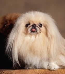 Psi i psići (kinologija, pasmine pasa, obuka pasa, dresura pasa, lovački psi, kućni psi, hranidba pasa, slike pasa, Vaša najdraža pasmina pasa, izložbe pasa, šetanje pasa, kupanje pasa, perilica za pse, hrana za pse) - Page 2 Head