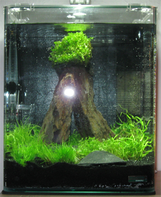 Aquaristik Nano Cube 20 BildNummer1