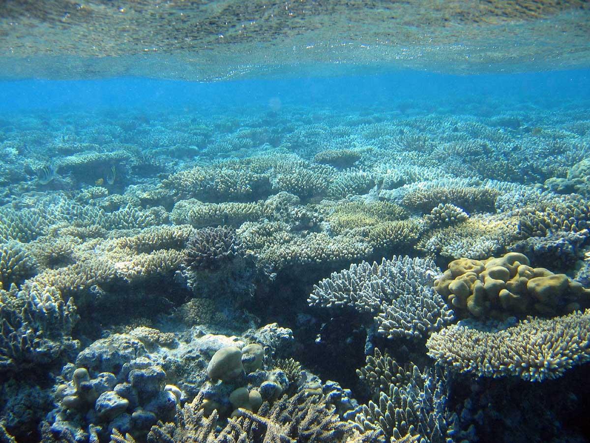 Treinamento Lupino - Página 9 Coral-de-agua-doce