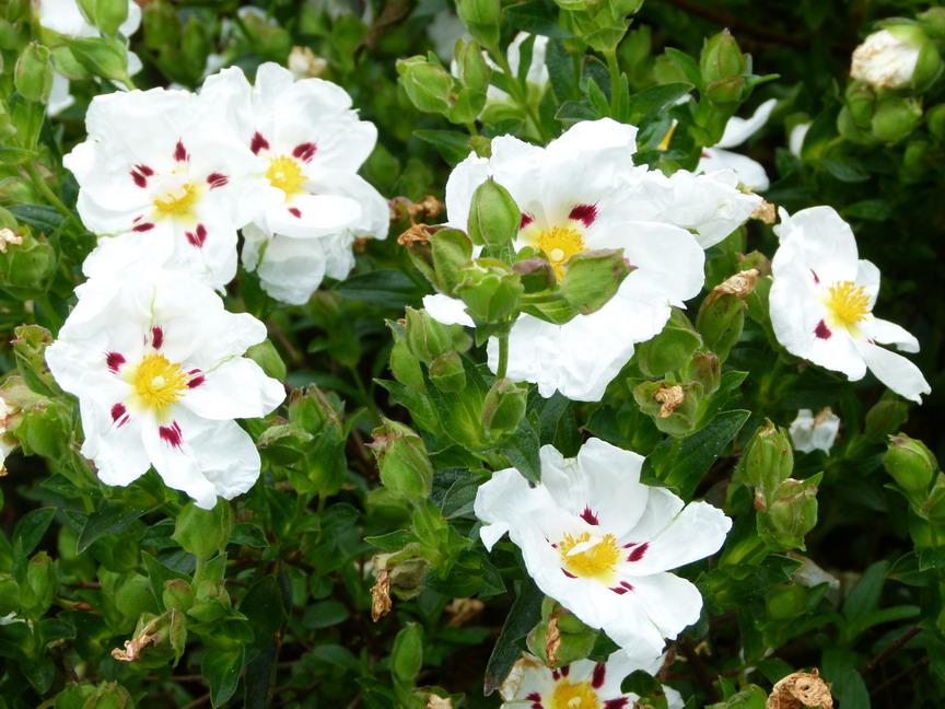 la fleur de Martin du 11 janvier trouvée par Jovany - Page 2 00004601
