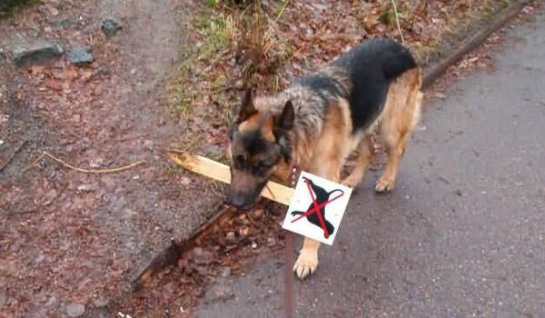 Imagenes Graciosas XD - Página 2 Imagenes-divertidas-perros