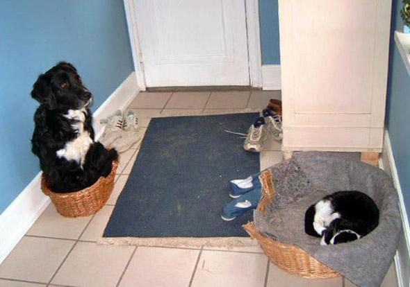 Imagenes Graciosas XD - Página 2 Imagenes-perros-gatos-graciosas