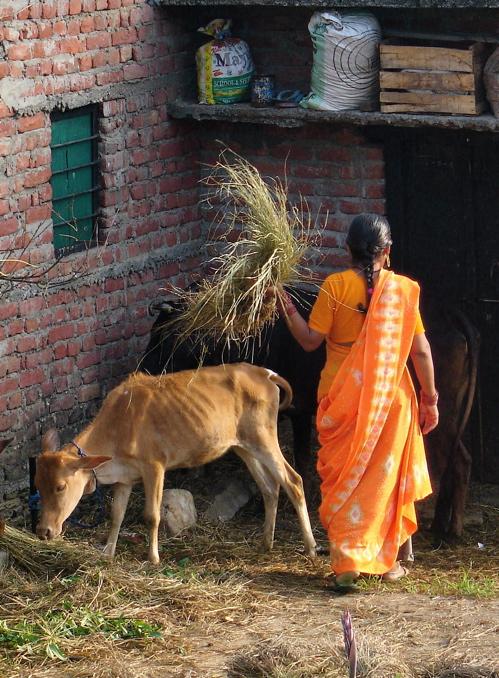 Orange Day Orange-sari