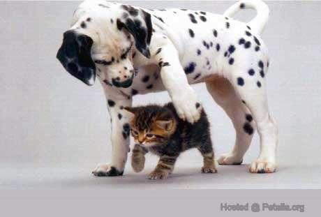 Những con vật dễ thương Animal_baby-7012