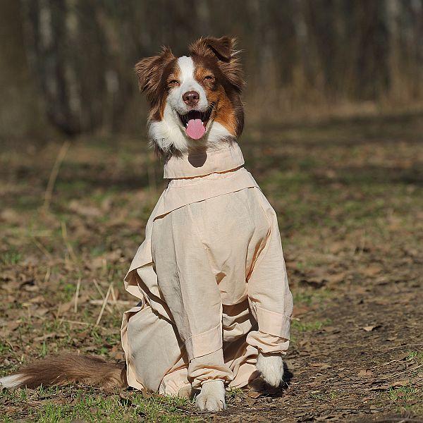 OSSO Fashion - лучшие товары для животных,дрессировки,спорта IMG_5498-600