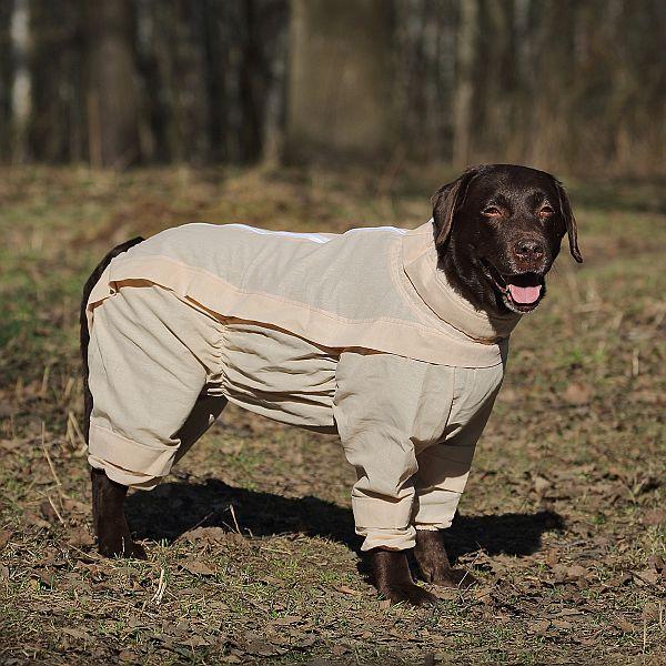 OSSO Fashion - лучшие товары для животных,дрессировки,спорта IMG_5460-600