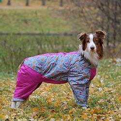 OSSO Fashion - лучшие товары для животных,дрессировки,спорта IMG_3827-250