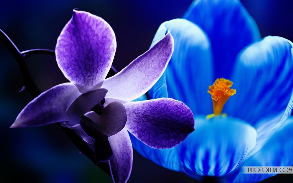ПРИВЕТСТВУЮ ВСЕХ НОВИЧКОВ ФОРУМА!!!! Pink_flower_in_the_water_wallpaper-1024x640