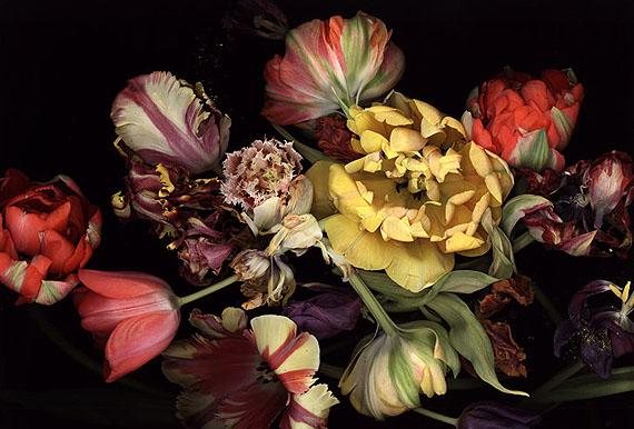Nature morte aux fleurs, vanité et carpe diem. 24483