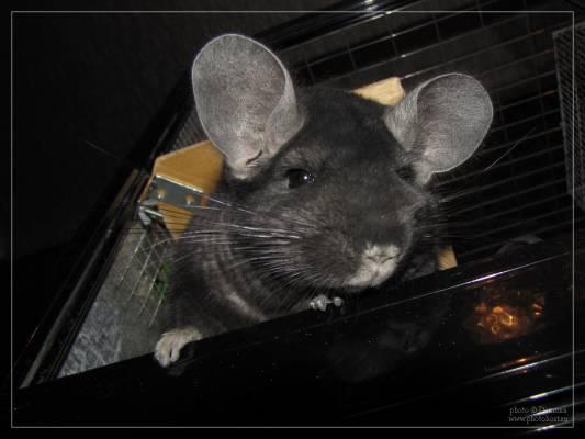 Наши любимые животные - Страница 3 636736