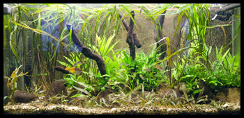 Population aquarium 240l avis Signat10
