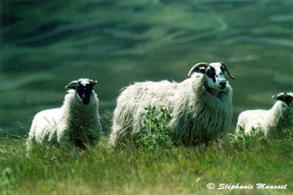 Belles photos d'animaux sauvages 02_25_large