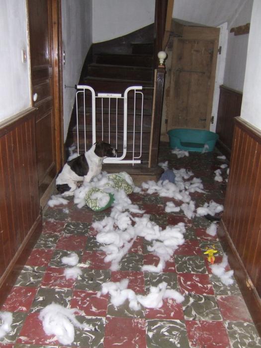 Le bêtisier de nos chiens - Page 8 M_83278321_0