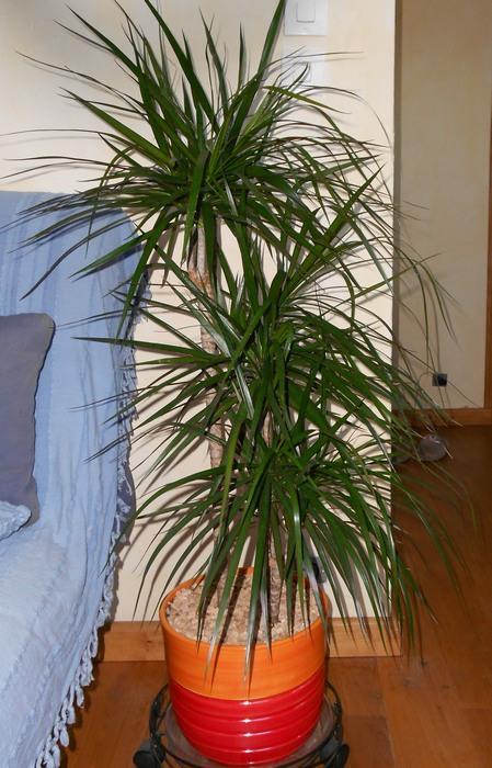 Deux palmiers sans nom... M_258637117_0