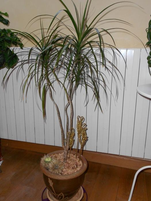Deux palmiers sans nom... M_258637129_0