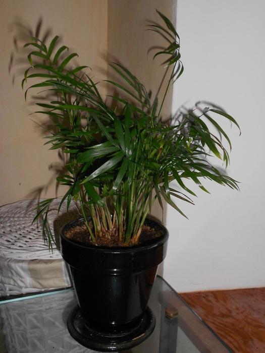 Deux palmiers sans nom... M_258637242_0