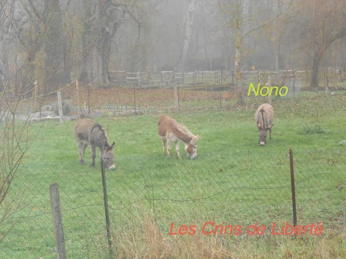 (dpt 77) NONO, âne, réservé par Sylvie et Gérard !!!!!!!! (Janvier 2014) M_262897897_0