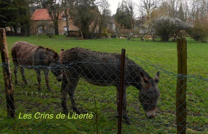 (dpt 77) NONO, âne, réservé par Sylvie et Gérard !!!!!!!! (Janvier 2014) M_268959776_0