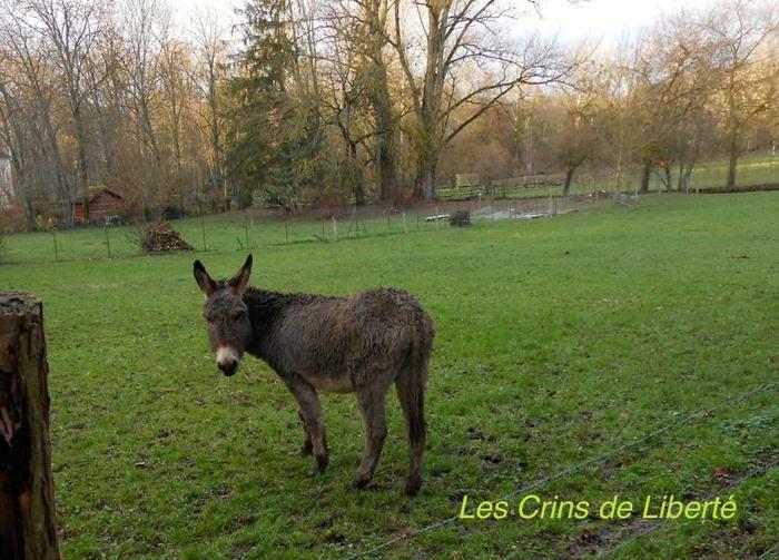 (dpt 77) NONO, âne, réservé par Sylvie et Gérard !!!!!!!! (Janvier 2014) M_268959787_0