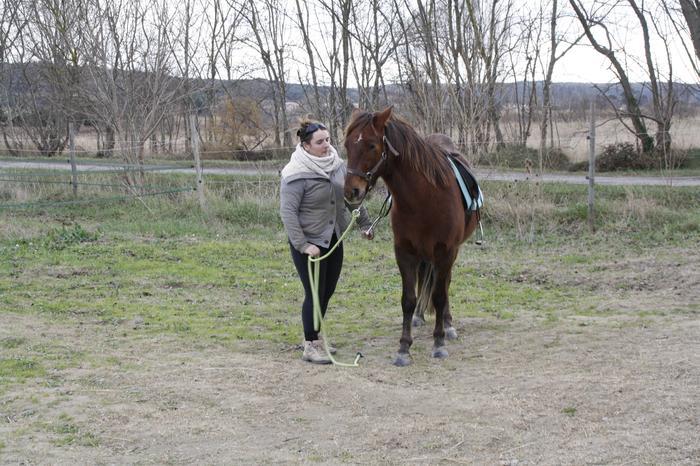 (Dpt 23) UTO, poney 4 ans, réservé par wakan11 !!!!!!!!!!!!!!!! (Déc 2011) - Page 4 M_269420279_0
