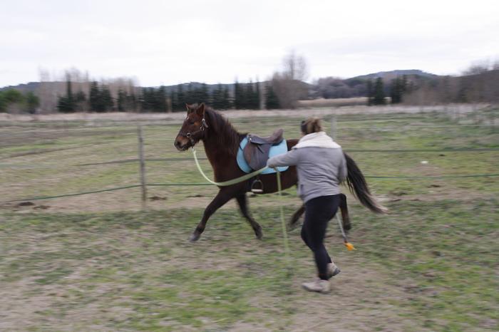 (Dpt 23) UTO, poney 4 ans, réservé par wakan11 !!!!!!!!!!!!!!!! (Déc 2011) - Page 4 M_269420551_0