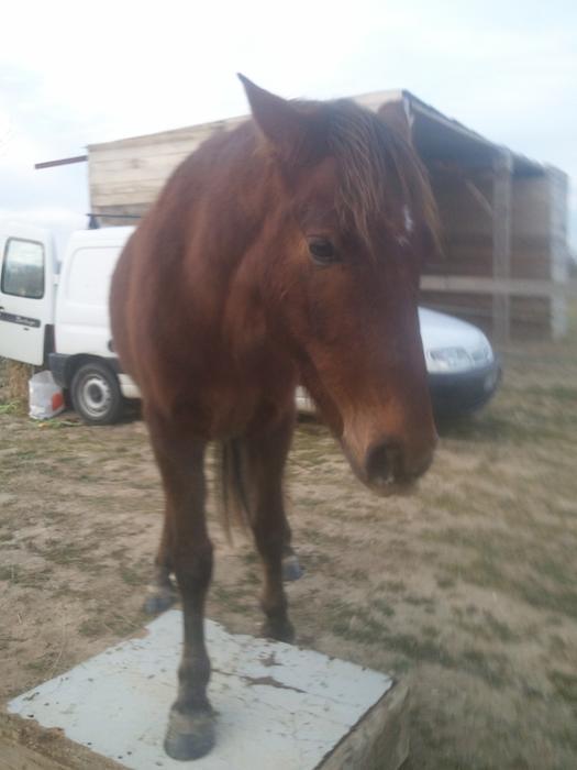 (Dpt 23) UTO, poney 4 ans, réservé par wakan11 !!!!!!!!!!!!!!!! (Déc 2011) - Page 4 M_269420819_0