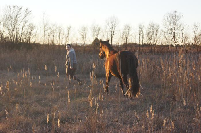 (Dpt 23) UTO, poney 4 ans, réservé par wakan11 !!!!!!!!!!!!!!!! (Déc 2011) - Page 4 M_269422641_0