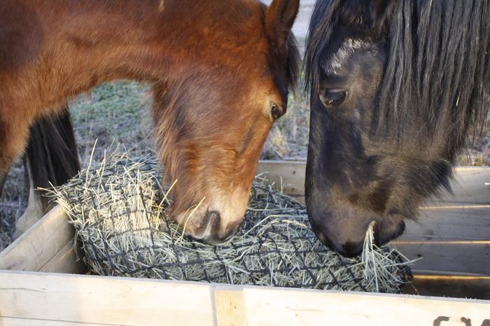 (Dpt 23) UTO, poney 4 ans, réservé par wakan11 !!!!!!!!!!!!!!!! (Déc 2011) - Page 4 M_272836178_0