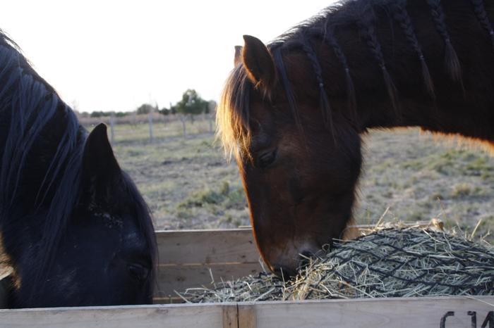 (Dpt 23) UTO, poney 4 ans, réservé par wakan11 !!!!!!!!!!!!!!!! (Déc 2011) - Page 4 M_272836333_0