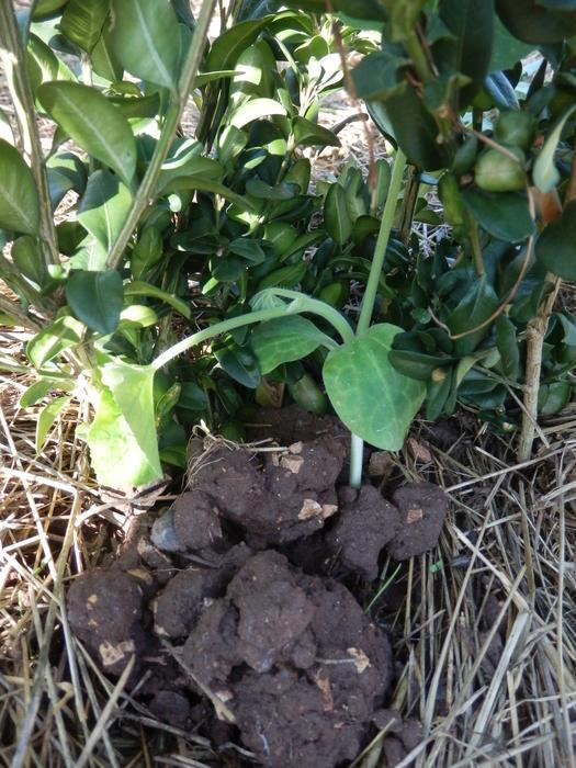 Protéger ses jeunes plants avec des fougères M_297023996_0