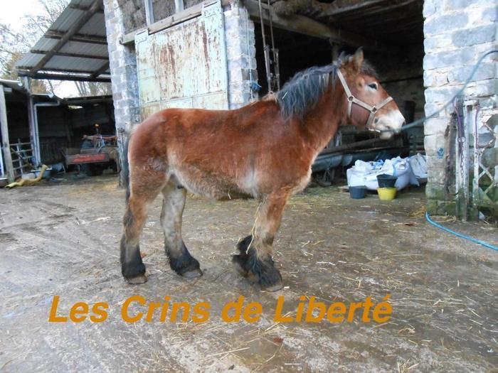 Azaro du Hameau, hongre trait auxois, adopté par Michel  (2017) - Page 27 M_328105772_0