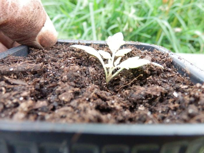 4 saisons au potager (l'almanach du jardinier) - Page 9 M_344785573_0