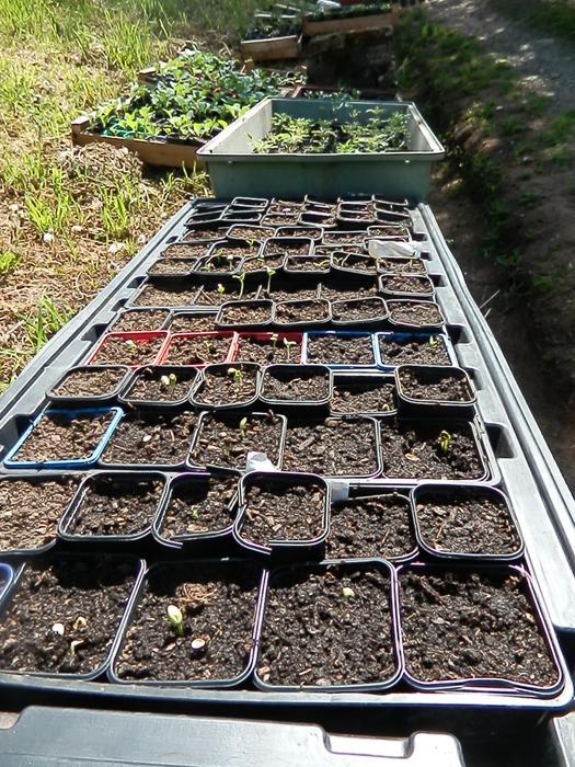 4 saisons au potager (l'almanach du jardinier) - Page 9 M_346646689_0