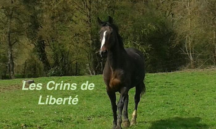 Dp 21 - 16 ans - Mystik du Bourg, hongre SF, adopté par Barbara (2017) M_474425773_0