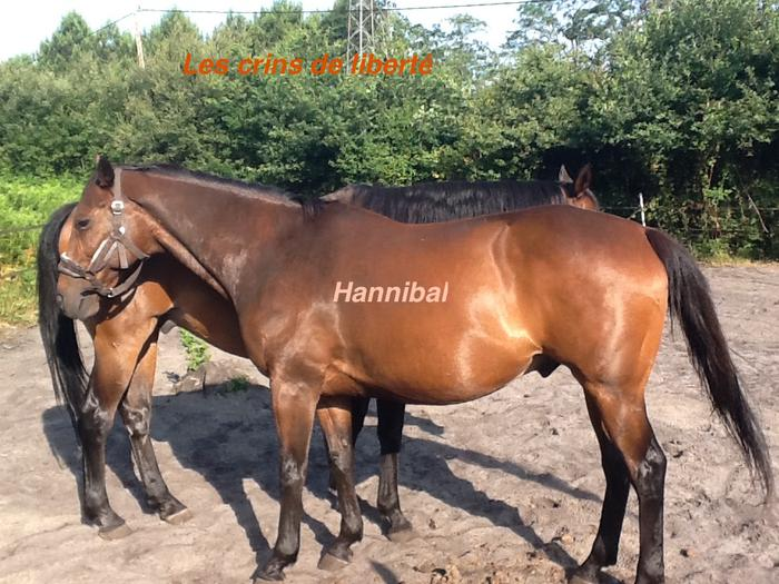 Dpt 33, 20 et 19 ans, Hannibal et Idéal, AA hongres pour RETRAITE, contact Cécile - Page 2 M_490416757_0
