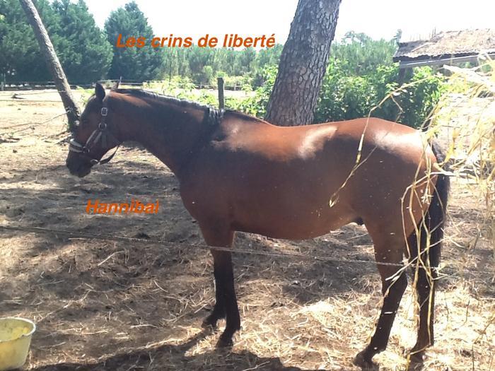 Dpt 33, 20 et 19 ans, Hannibal et Idéal, AA hongres pour RETRAITE, contact Cécile M_490416903_0