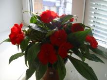 наши домашние цветники 45mfug-jc9