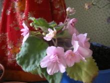 наши домашние цветники 45mfww-8nz