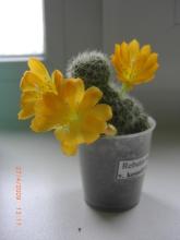 наши домашние цветники 45o3zd-l3a