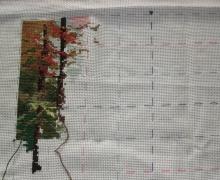 Совместный процесс - Кинкейд - Страница 2 4a6cor-ipz