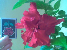 наши домашние цветники 458s8k-pro