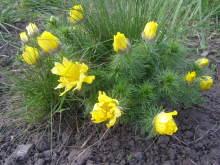 Когда начнется весна? 50um0x-gf0